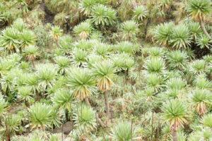 10.Vegetácia v Simienskych horách.