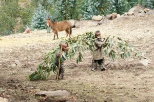 13.V Etiópii musia pracovať aj malé deti