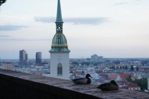 Vpravo kačica divá (Anas platyrhynchos), vľavo kačica novinárska (Anas grafofamas). Vzhľadom na zvýšený výskyt novinárskych kačíc v slovenskom biotope venujúcich sa kauze vojenských tučniakov a vzhľadom na snahu posilniť demokraciu na Slovensku, vláda premiéra Plechu v súčinnosti so Slovenským poľovným zväzom mimoriadne zvýšila kvótu povolených odstrelov kačíc druhu Anas grafofamas tentoraz výnimočne spolu s ich autormi.