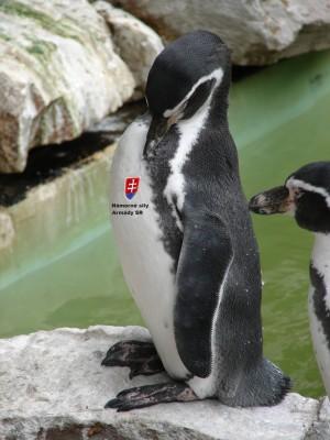 Tučniak kráľovský vycvičený pre potreby Námorných síl Armády SR sa hrdo pozerá na slovenský znak na svojej hrudi.