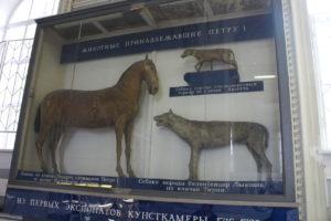 Vitrína s obľúbenými zvieratami cára Petra I. Veľkého